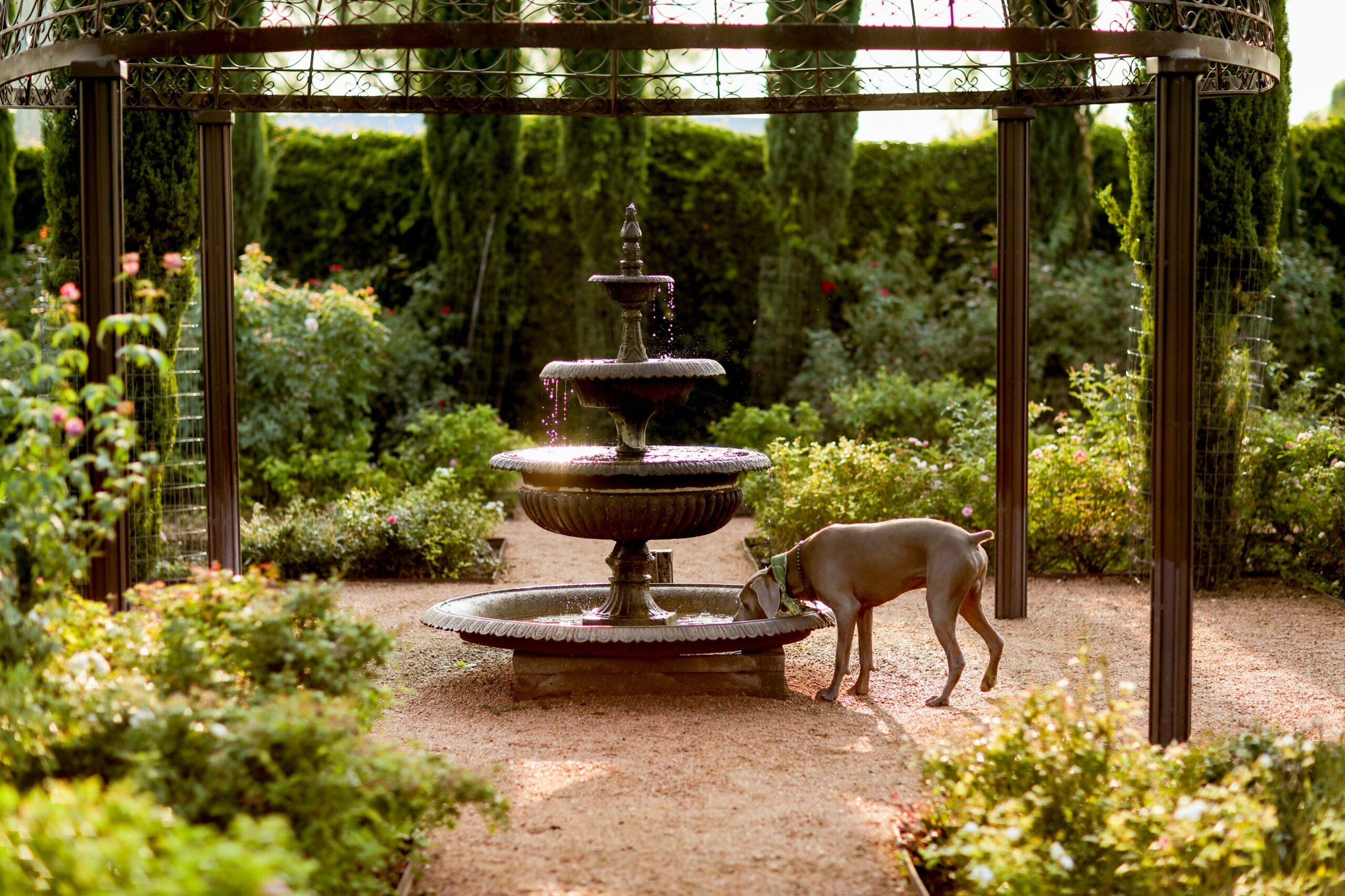 gardensdog